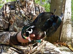 Yamaha Outdoors Tips — Why You Should Hunt Wood Ducks