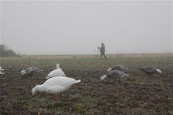 Hunting Conservation Order light goose seasons is not only fun, but it also helps manage abundant populations, protecting critical habitat and the birds themselves. (Yamaha Outdoors photo)