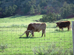Know the land well enough so that you aren't disturbing a farmer's livestock. Hickoff photo